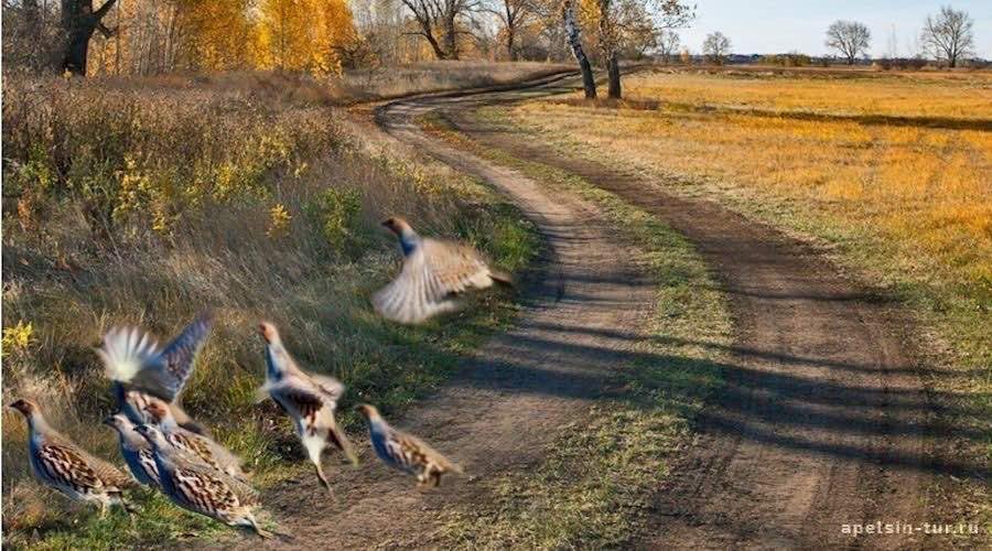 Пойма Любинская