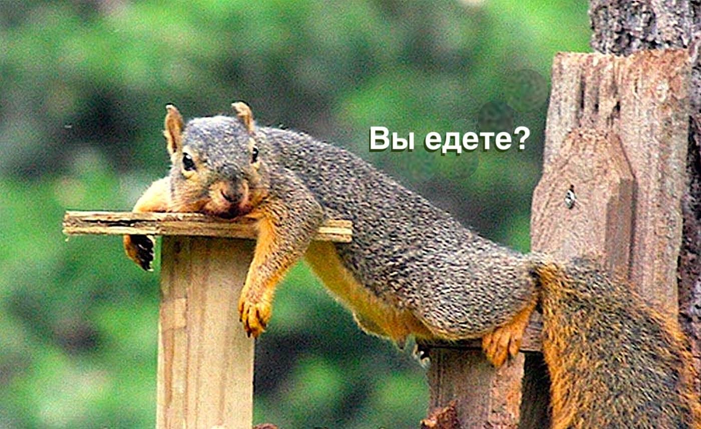 Куда поехать в Омске на природу