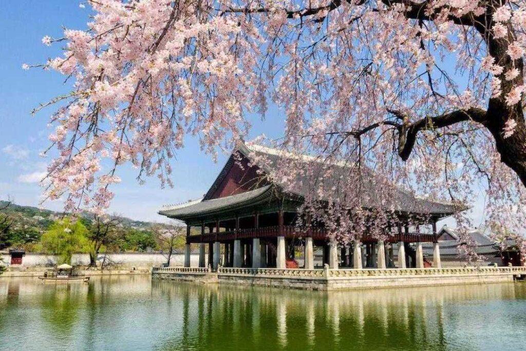 Клеточное омоложение в Корее